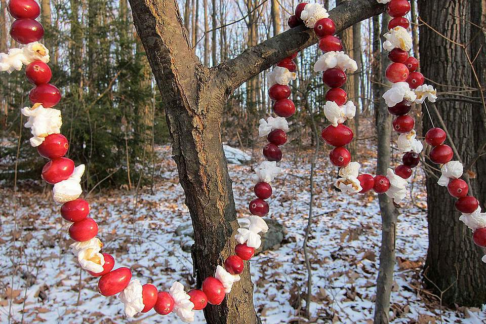 Bird Feeder Cranberry Garland