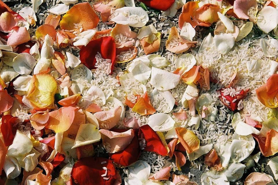 Wedding Rice and Rose Petals