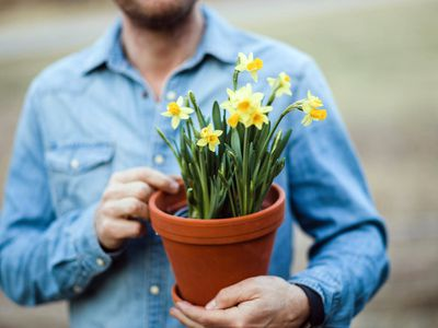 A man holding a pot of daffodils