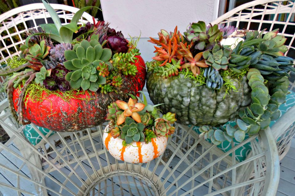 A set of succulent pumpkin centerpieces