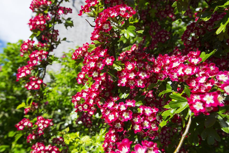 Flowering Trees Pictures For Landscaping Inspiration