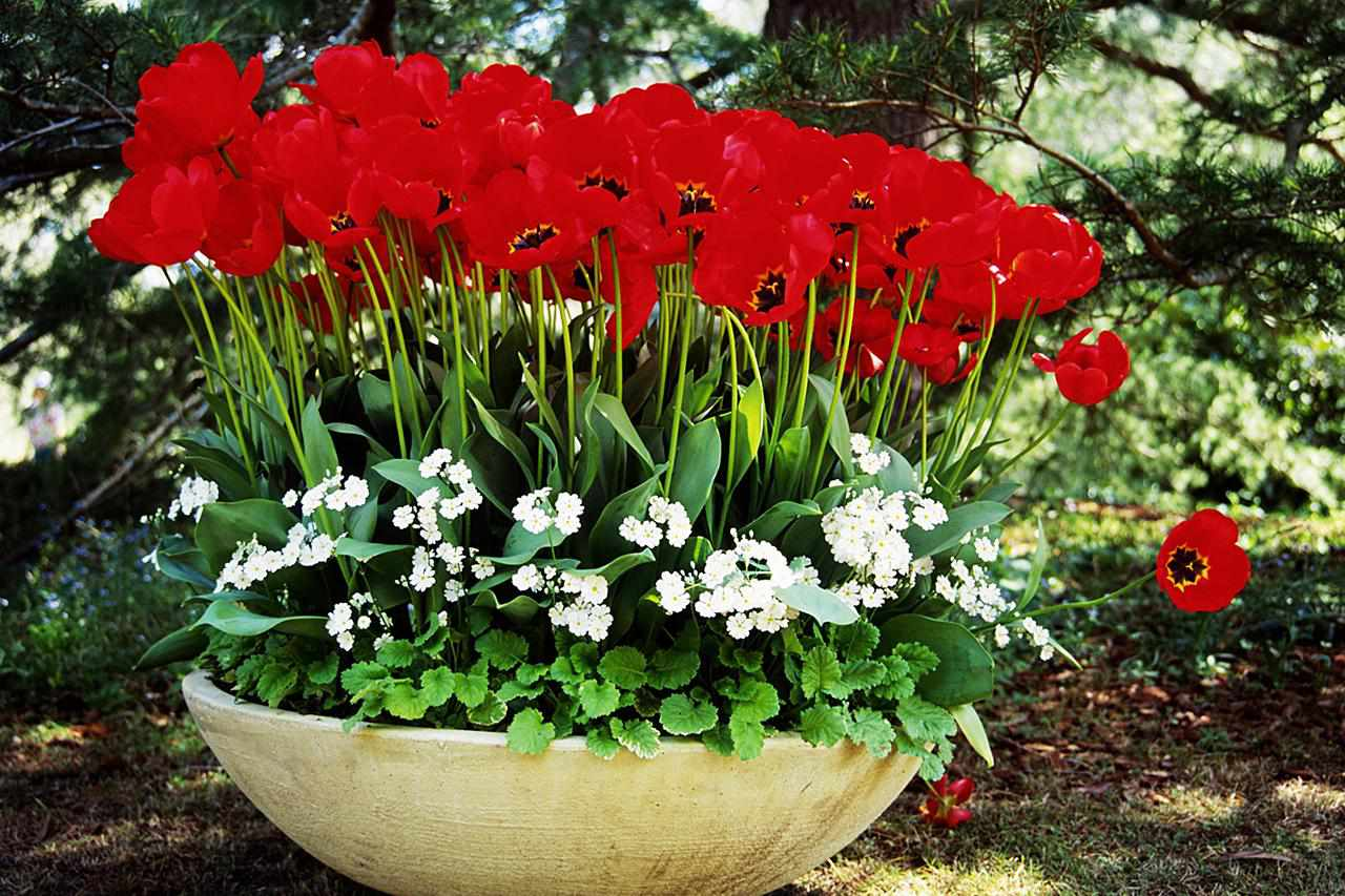 6 Tips For A Better Spring Flower Garden