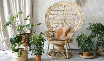 wicker peacock chair