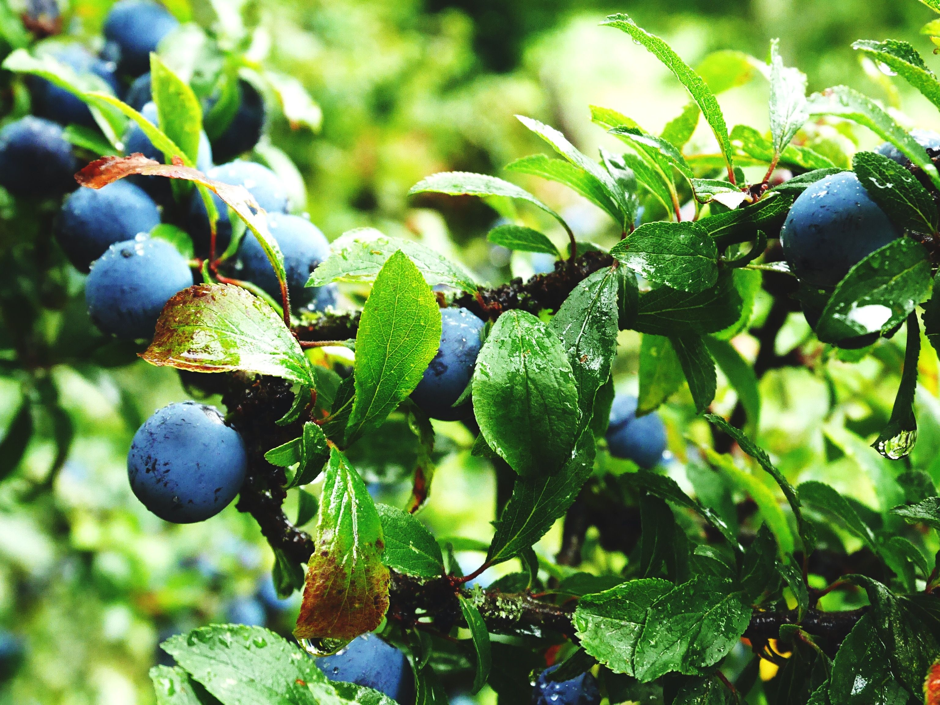 Best Berry Plants For Edible Landscaping