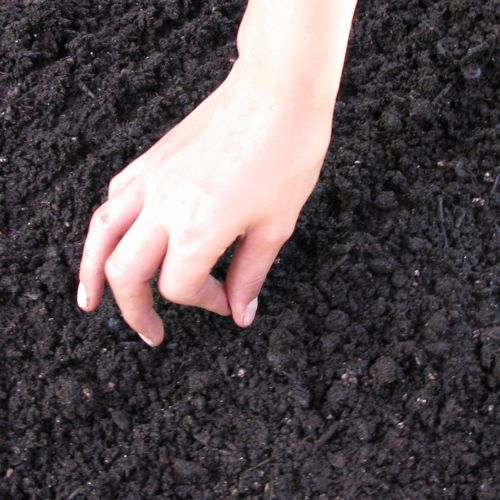 container gardening picture of planting seeds