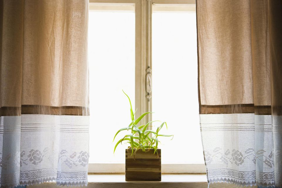 Potted aloe vera plant on windowsill