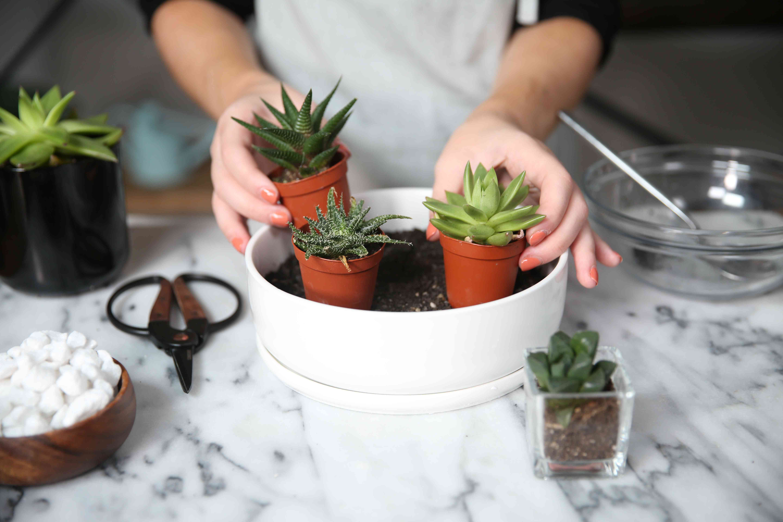 arranging the succulent container garden