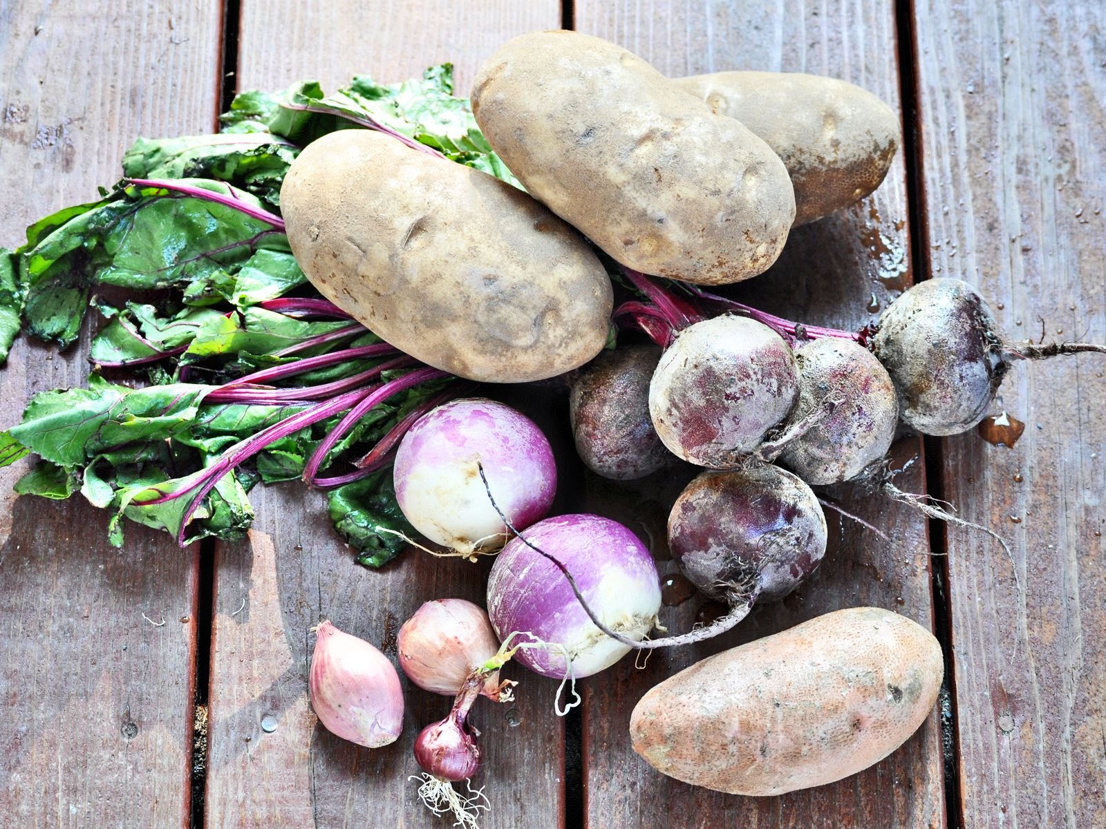 Avoiding Problems Growing Root Vegetables