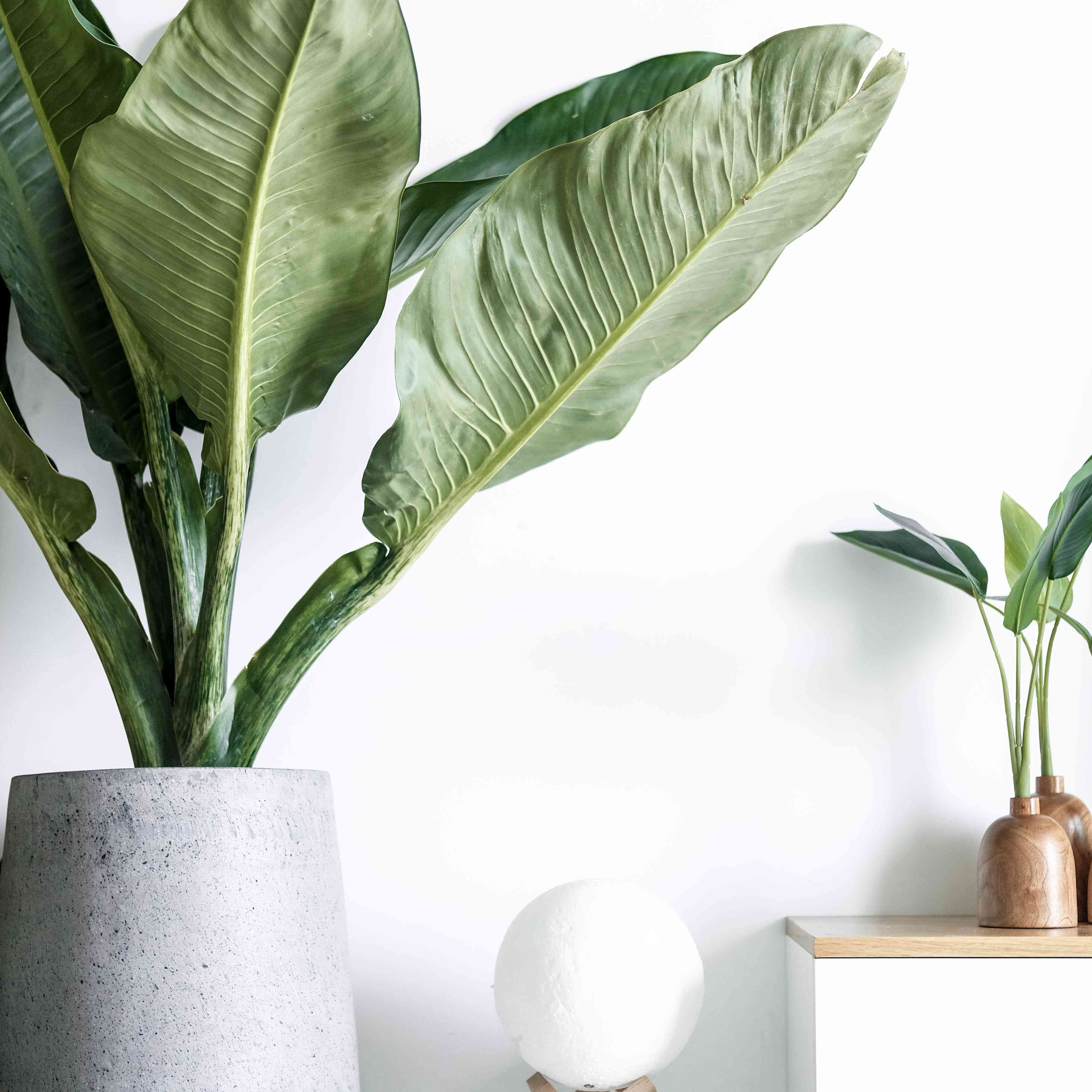 plants on stands with a white wall