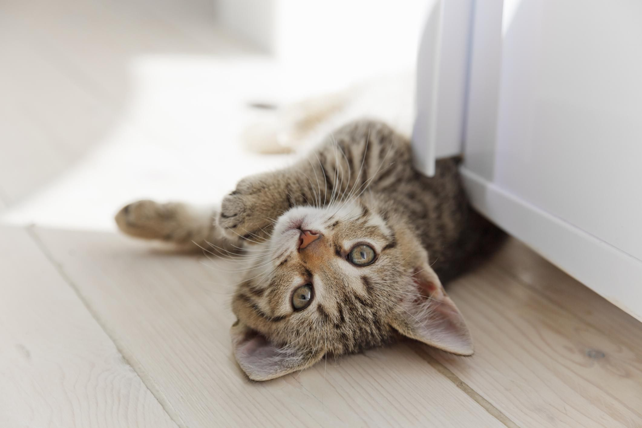 How To Get Cat Urine Odor Out Of Wood Floors