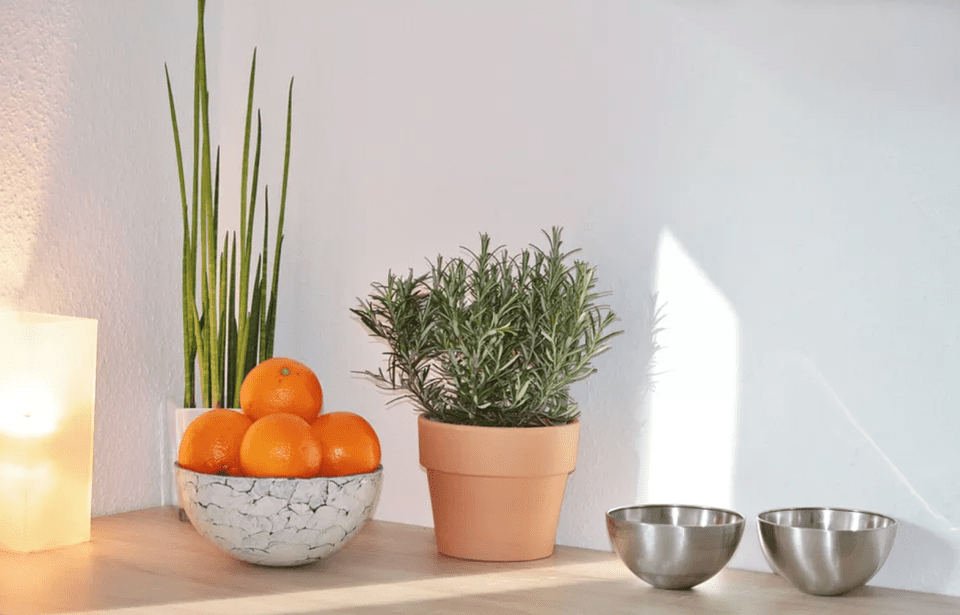 Potted herbs, bowl of oranges, and two stainless steel bowls on a counter.