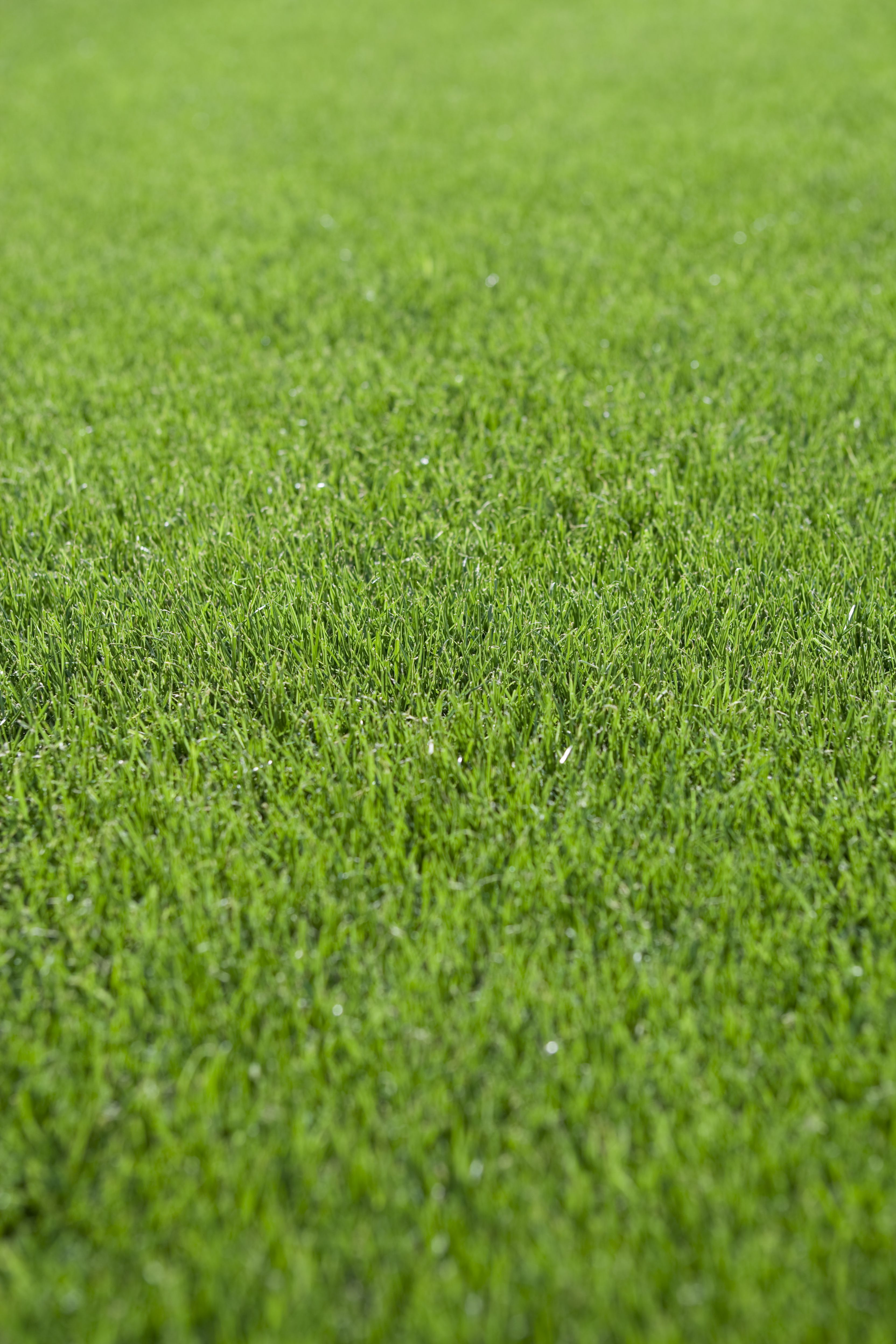 Overseeding Lawns With Warm Season Grasses