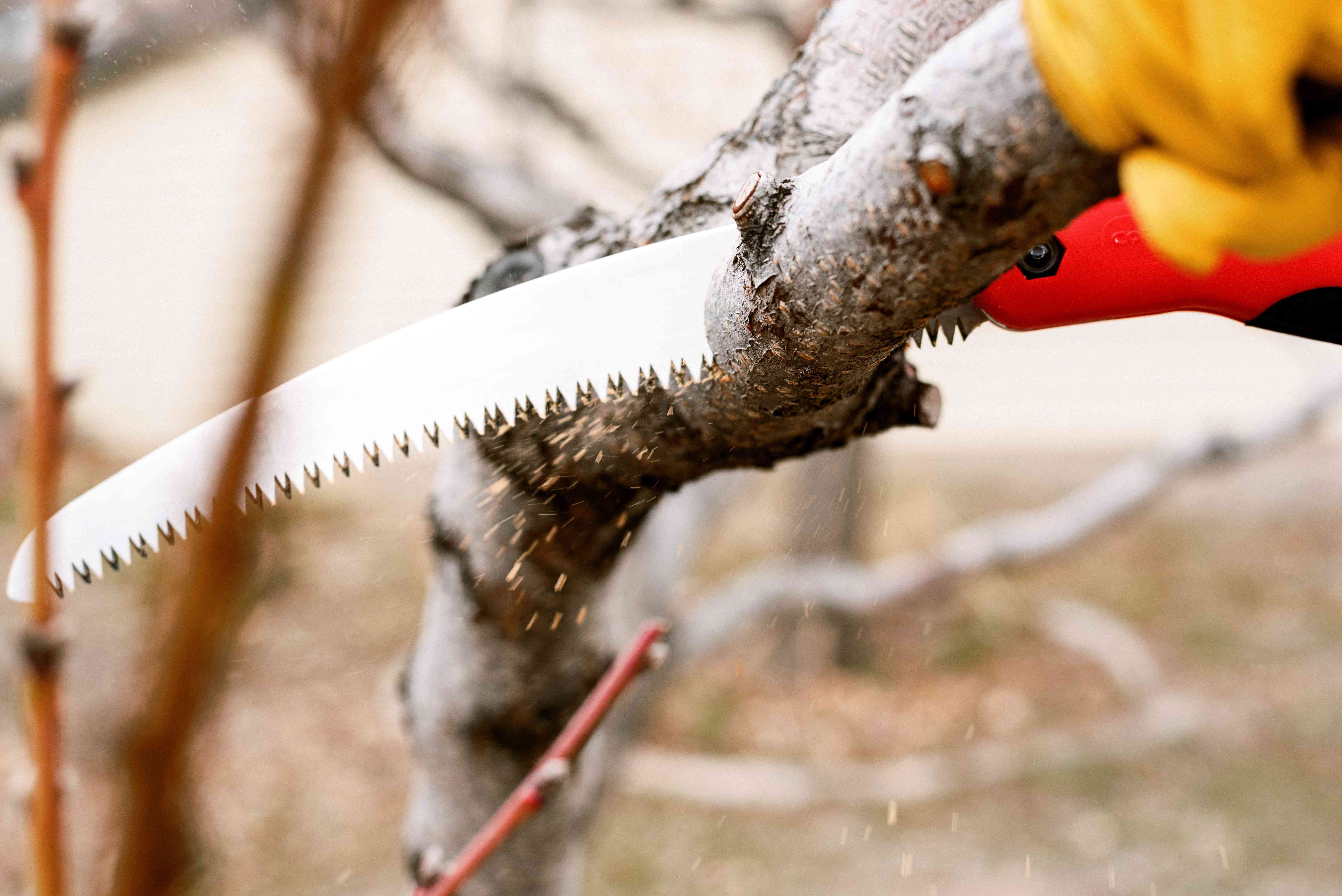 Pruning saw cutting into shrub branch with brisk speed