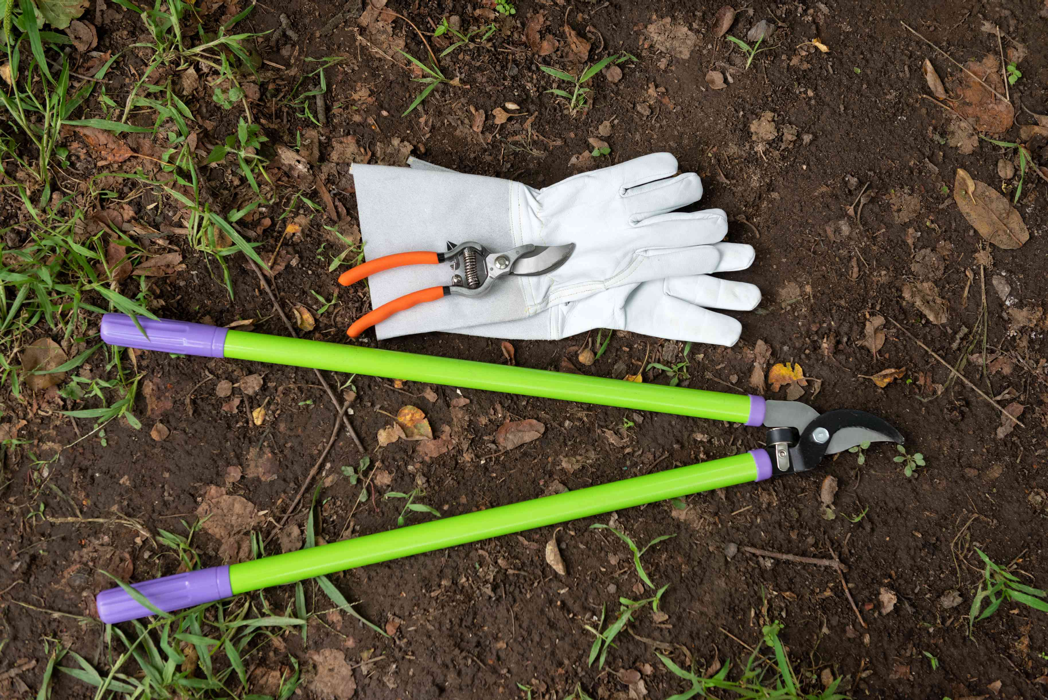 Tools for pruning hybrid tea roses