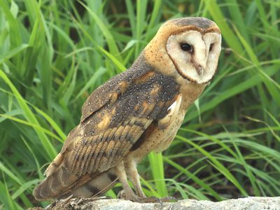 Easy Ideas for How to Attract Owls to Your Yard