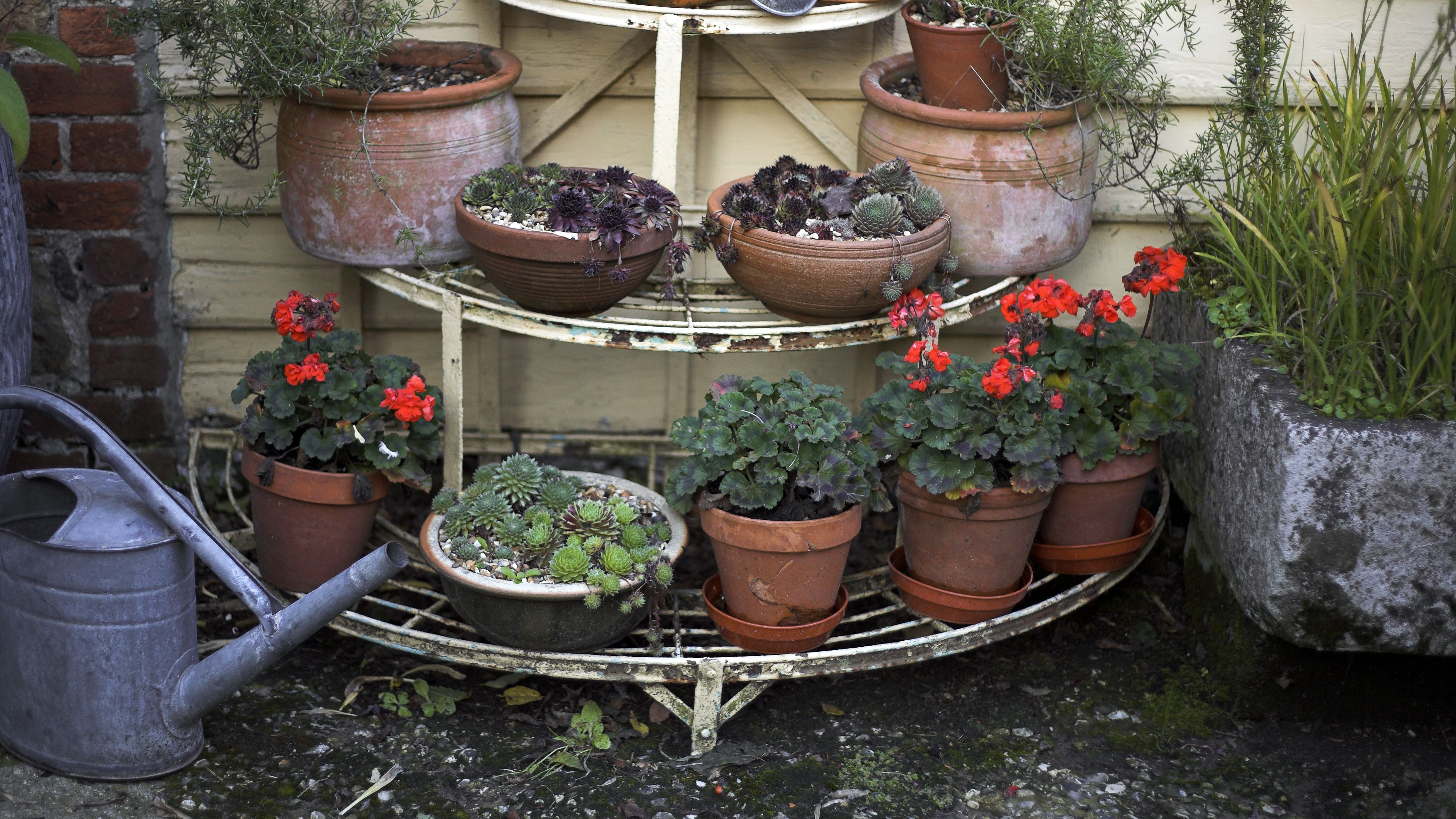 Useful Tips For Fall And Winter Container Gardening
