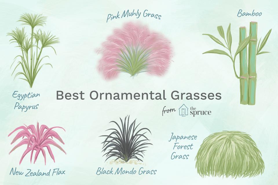 Pastos ornamentales fáciles