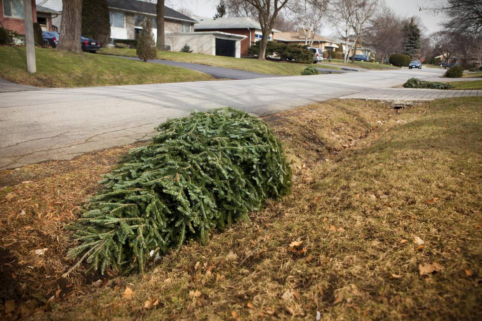 Christmas tree on the curb for garbage
