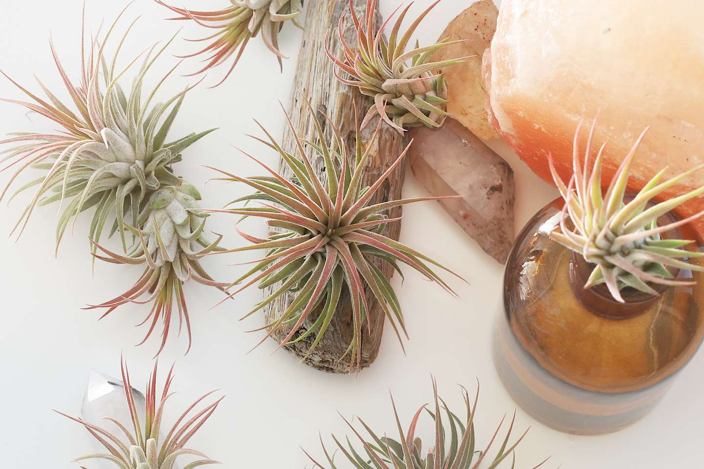 air plants mounted on various surfaces