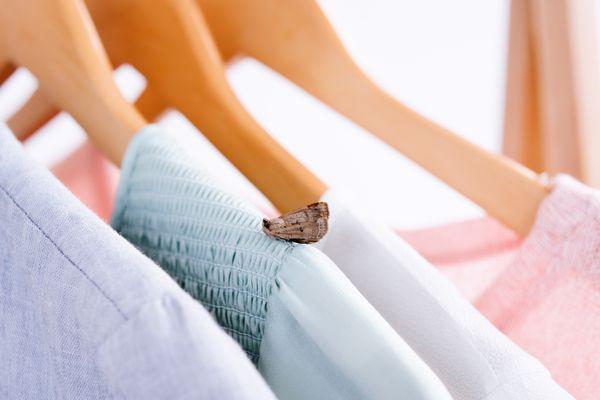 moth on clothing