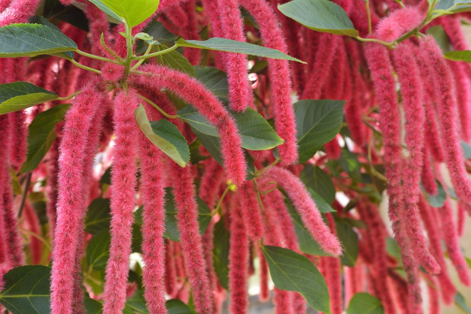 Chenille Flowers