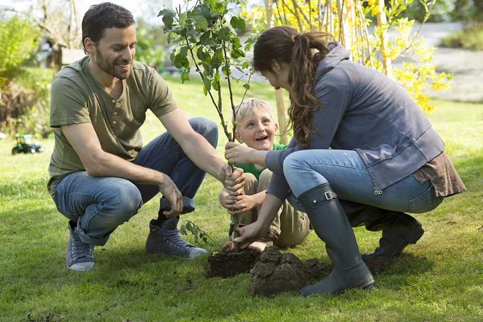 Family planting a tree