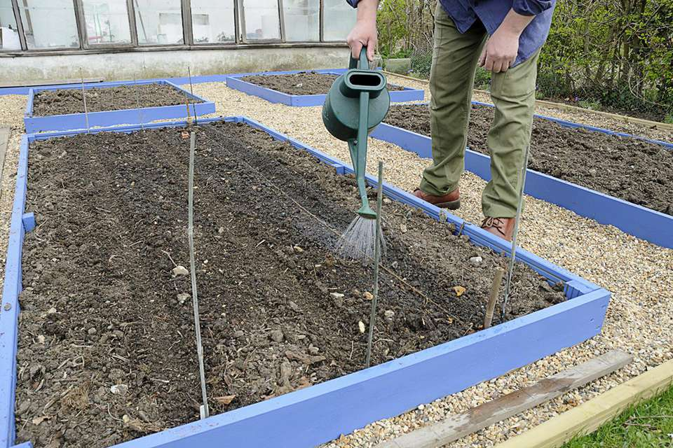 Person prewatering a trough with a watering can before sowing seeds, April, UK