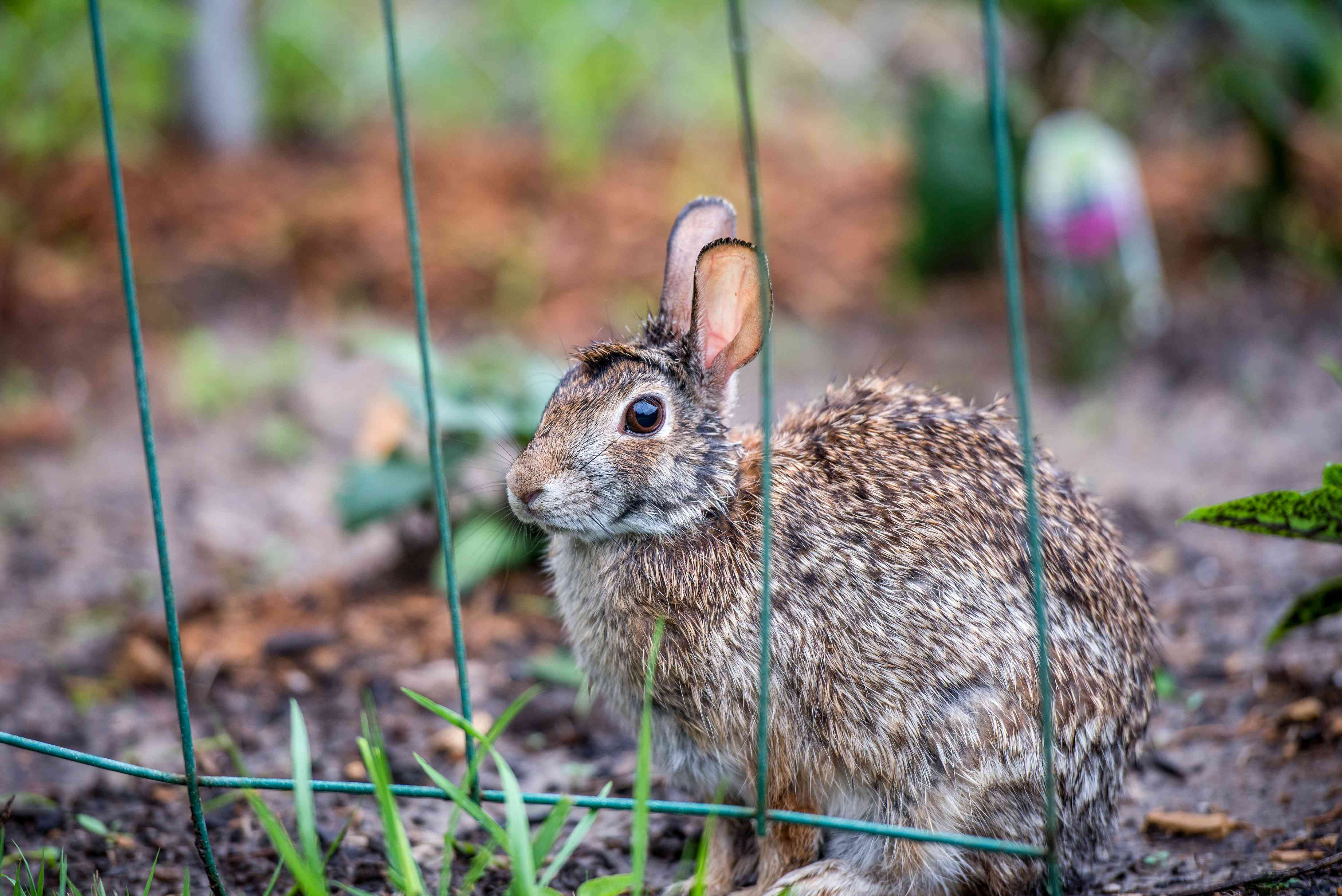 garden fencing to keep rabbits out