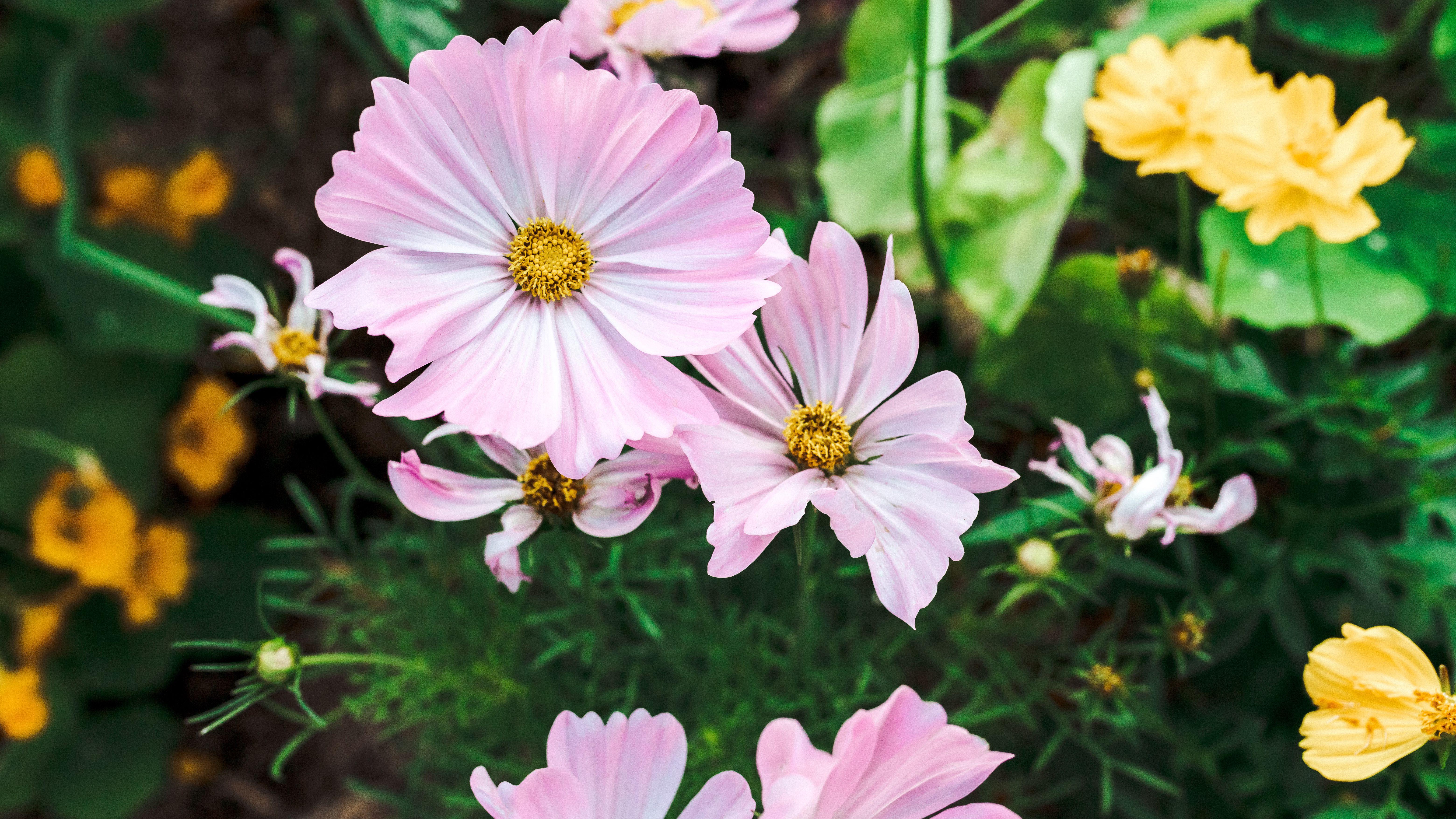 9 Best Flowers For The Vegetable Garden