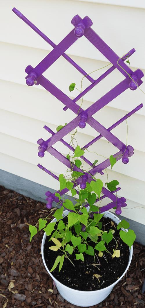 10 diy garden trellises that cost less than 20 diy garden trellis solutioingenieria Gallery