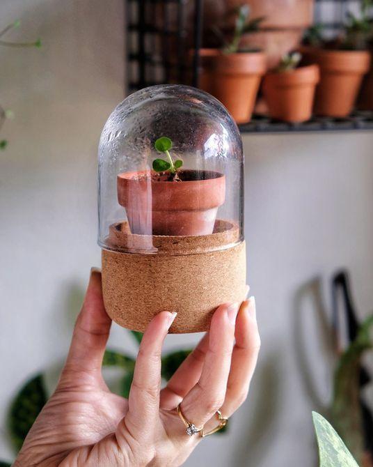 Terrario pequeño con maceta de barro