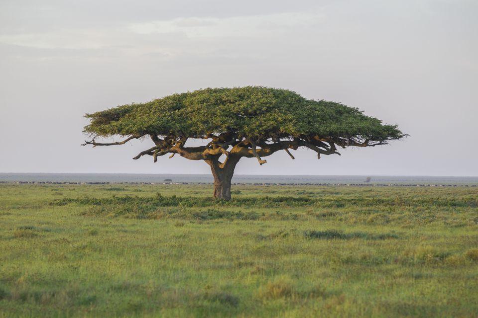 Parque Nacional del Serengeti, Tanzania.
