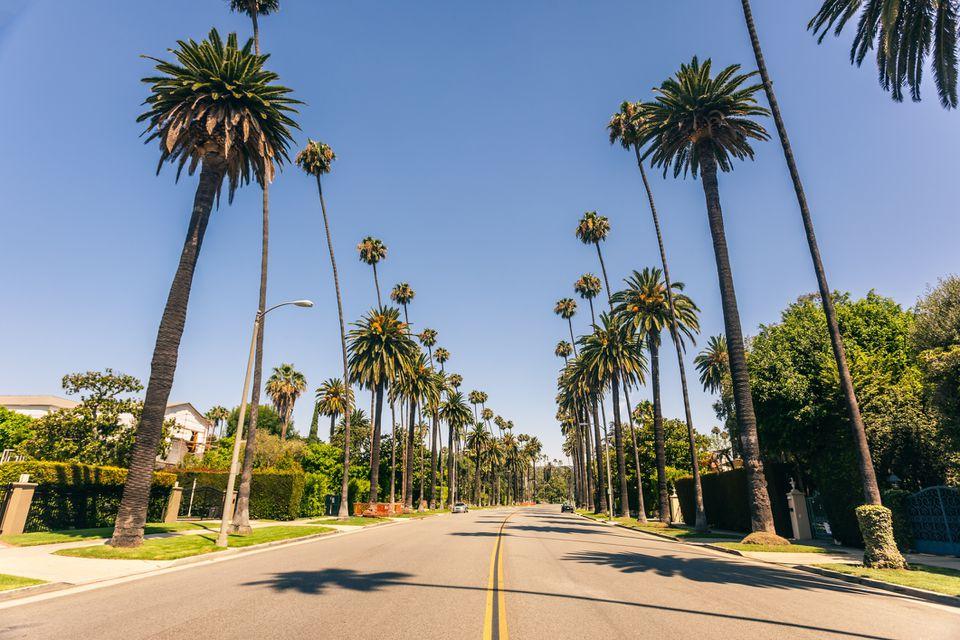 Palm tree lined street