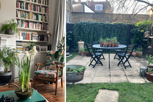 Alice Vincent's living room and garden, both full of plants