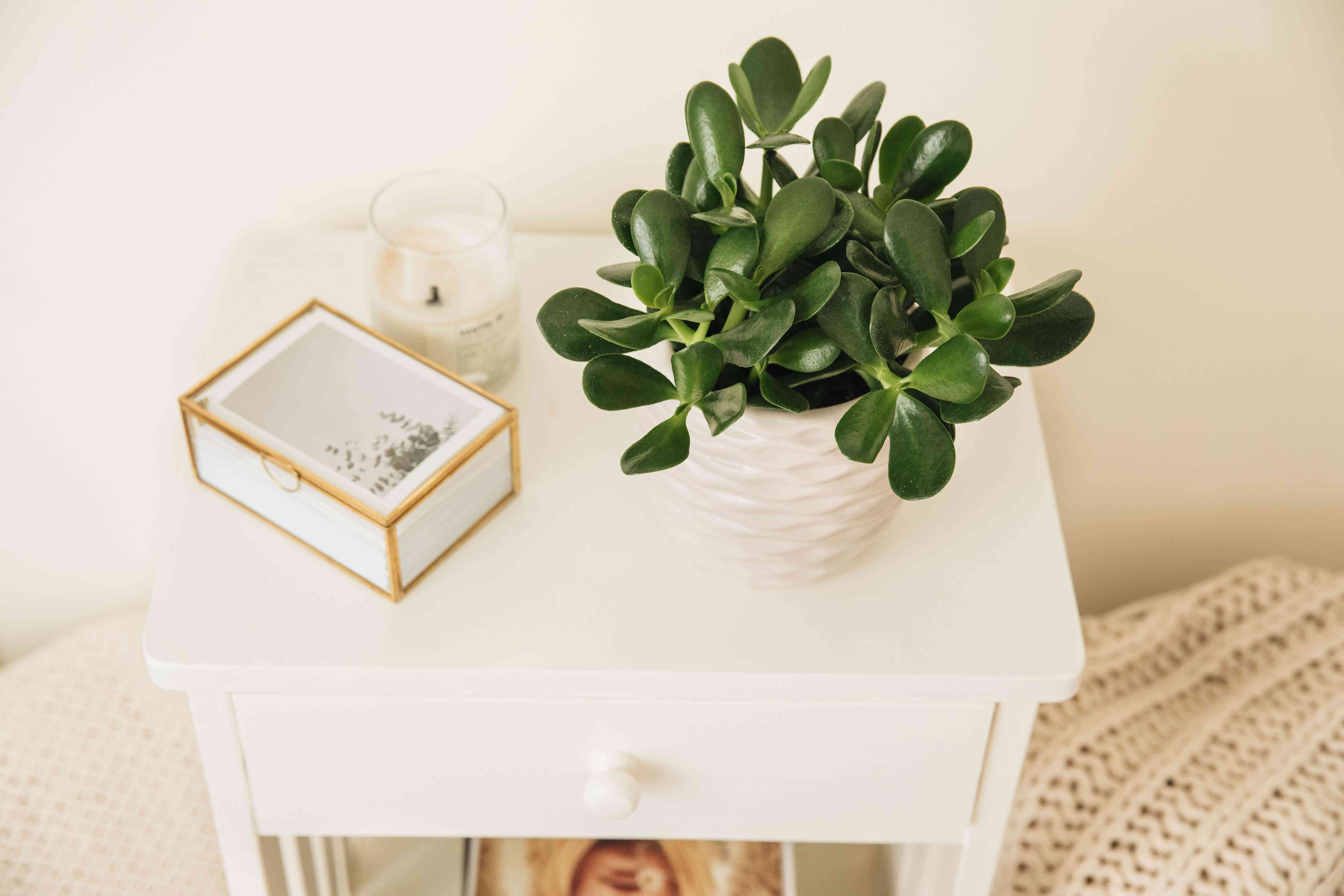 Jade plant in white pot on white nightstand next to feng shui decor items