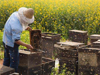 Buying Honey Bees and Beekeeping Supplies Online