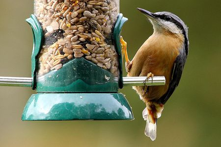 Birds In Your Backyard how to attract new bird species to your backyard