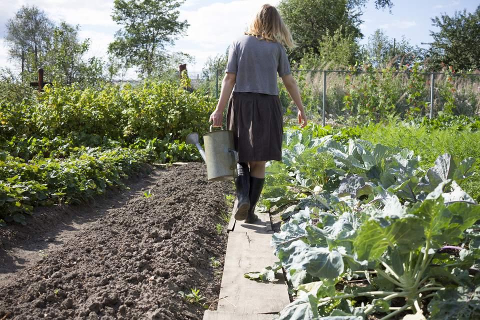 A woman watering her garden
