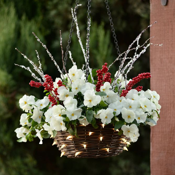 Cool Wave White Pansy Basket