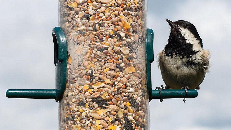 Идеальный корм для птиц