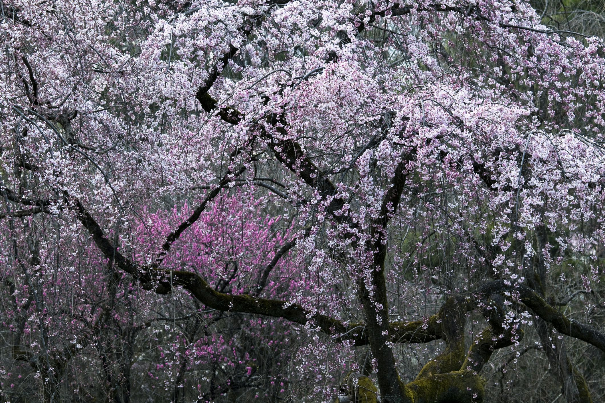 The best flowering trees for your landscape mightylinksfo