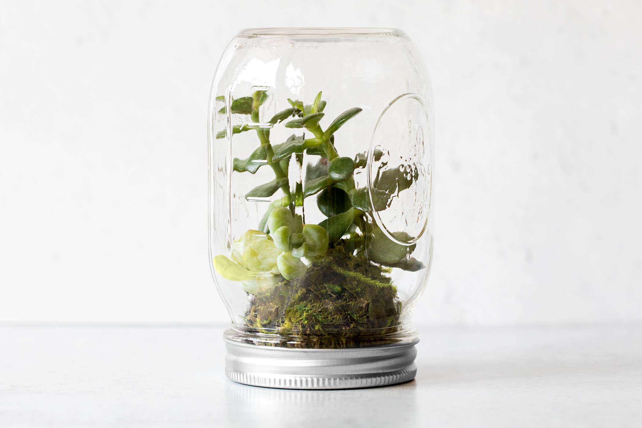 finished mason jar terrarium