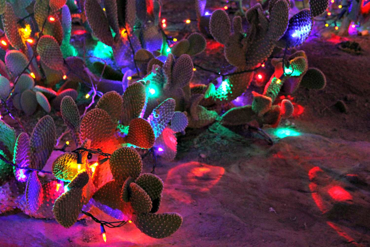 Paddle cactus plants decorated with multi-color bulbs