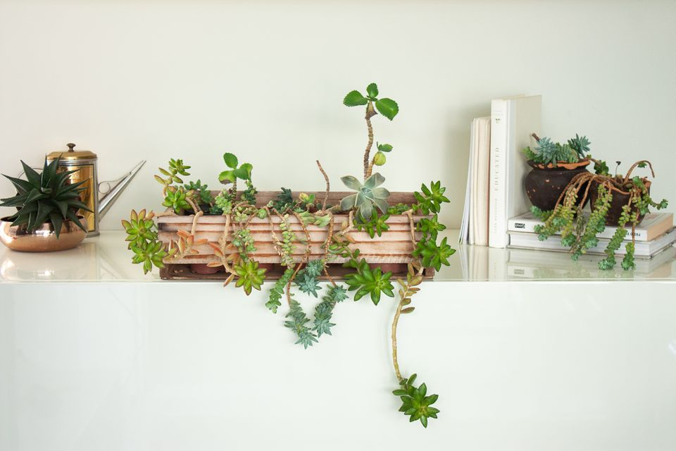 a variety of succulents on a shelf