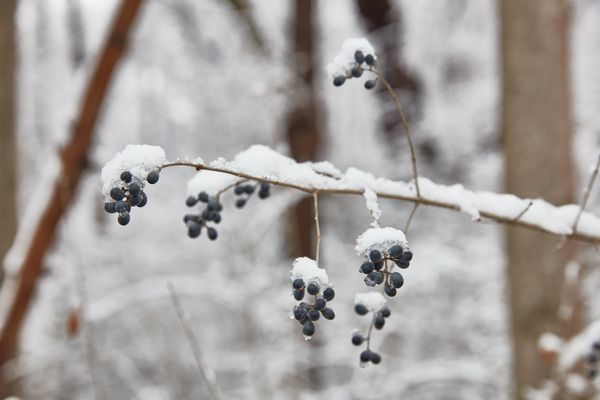 a plant covered in a snow