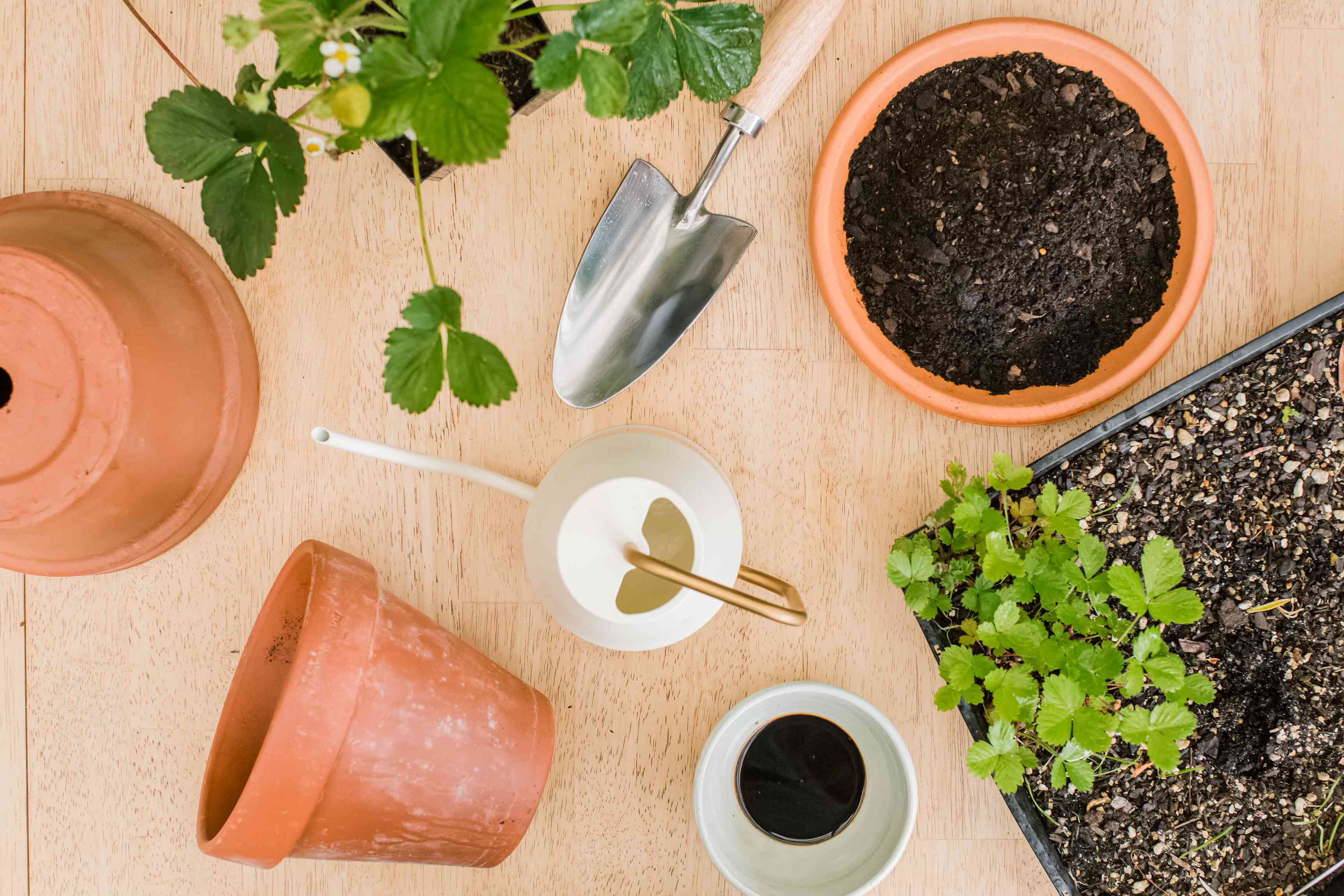 materials for planting strawberries