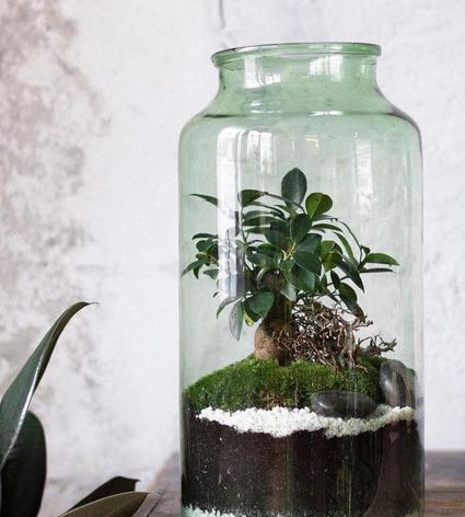 Intro On How To Make A Terrarium