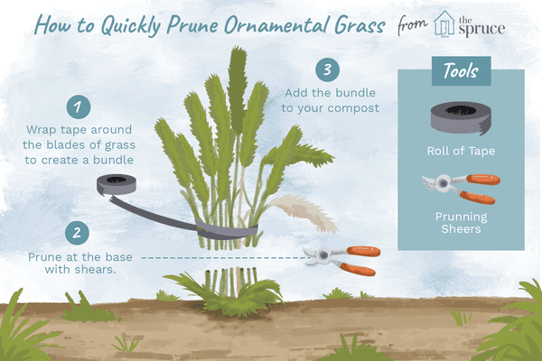 how to quickly prune ornamental grass illustration