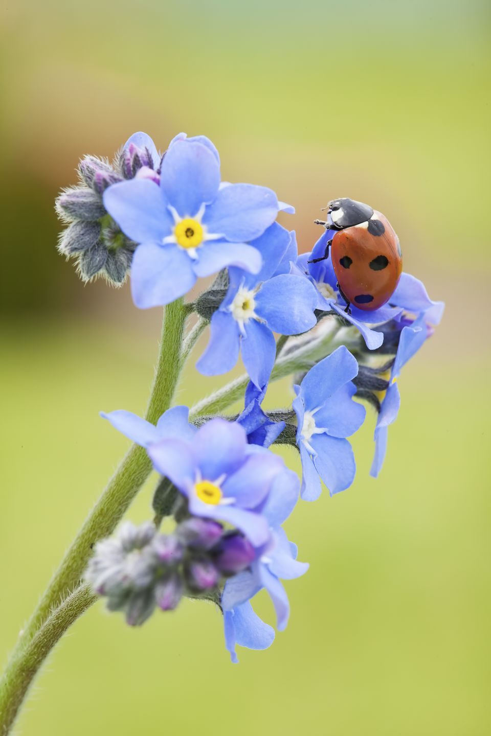 Tiny Flowers With Big Influence in Your Garden