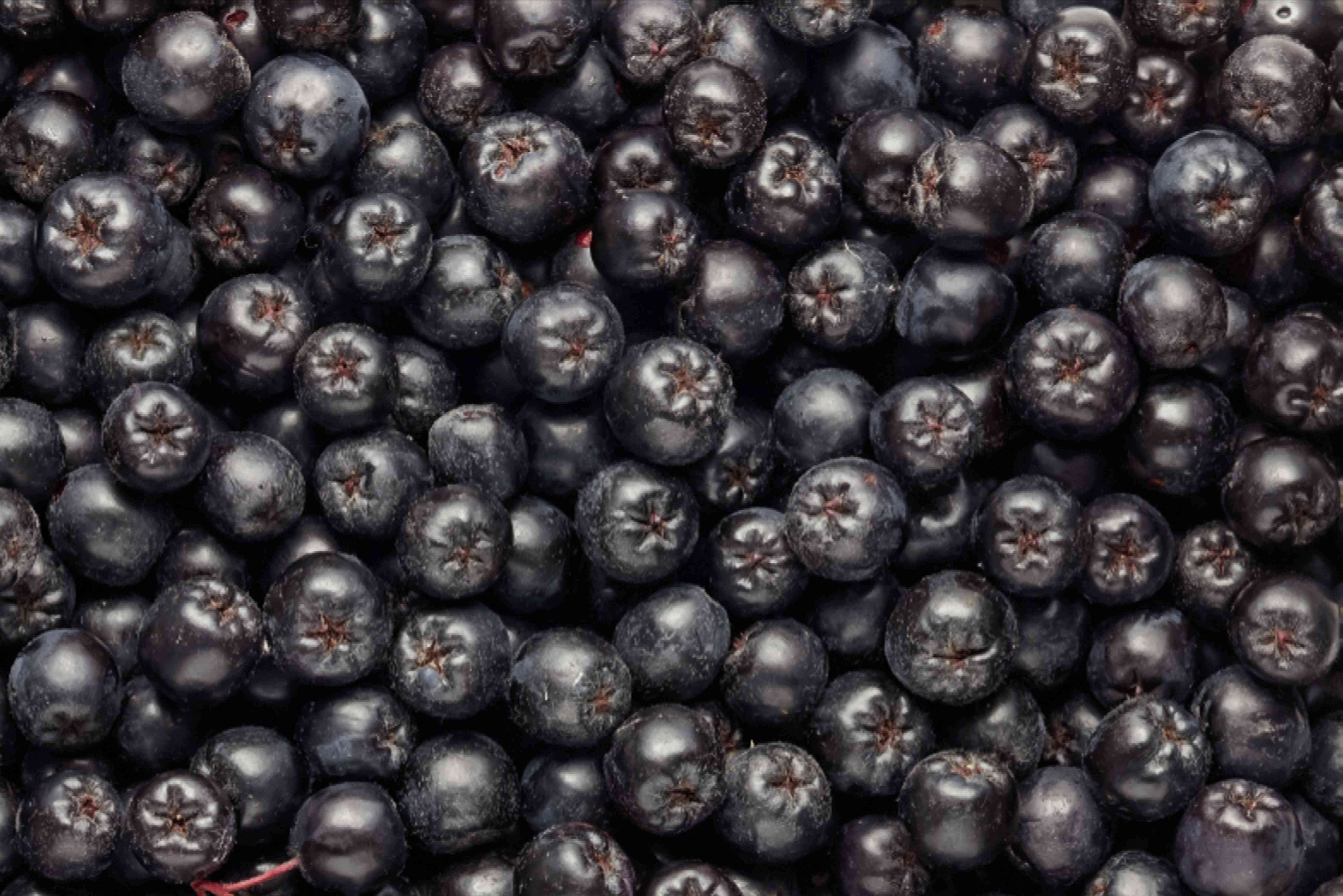Black chokeberry fruits piled on each other closeup